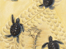 To the Sea - Turtle Hatchlings