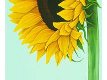 Sunflower & Peacock Butterfly