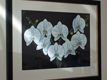 Tranquility - White Orchids