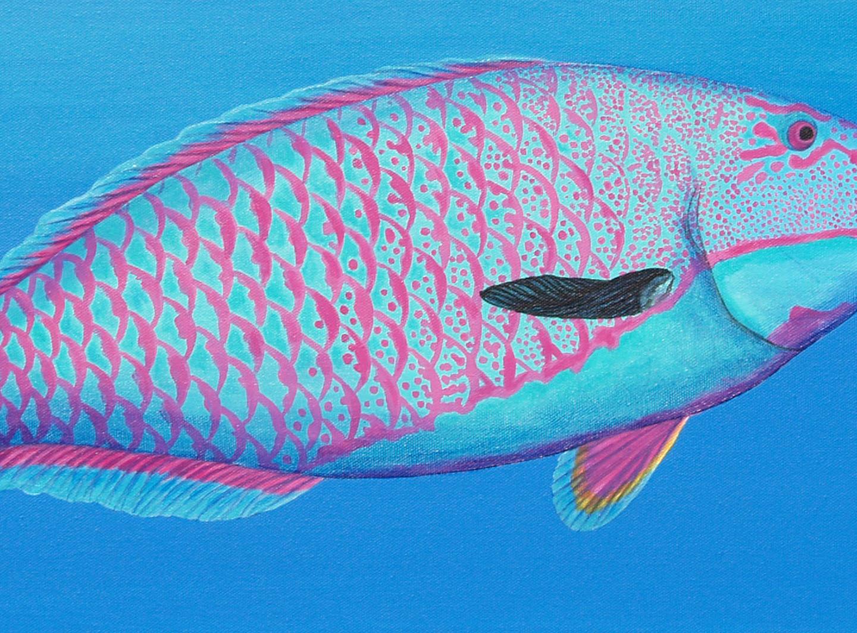 Parrotfish & a Jellfish