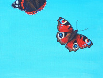 Red Admiral & Peacock Butterfly