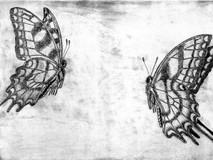 Flight of Swallowtails (8 remaining)