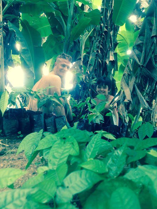 empezando a transplantar los arbolitos de cacao.jpg.jpg