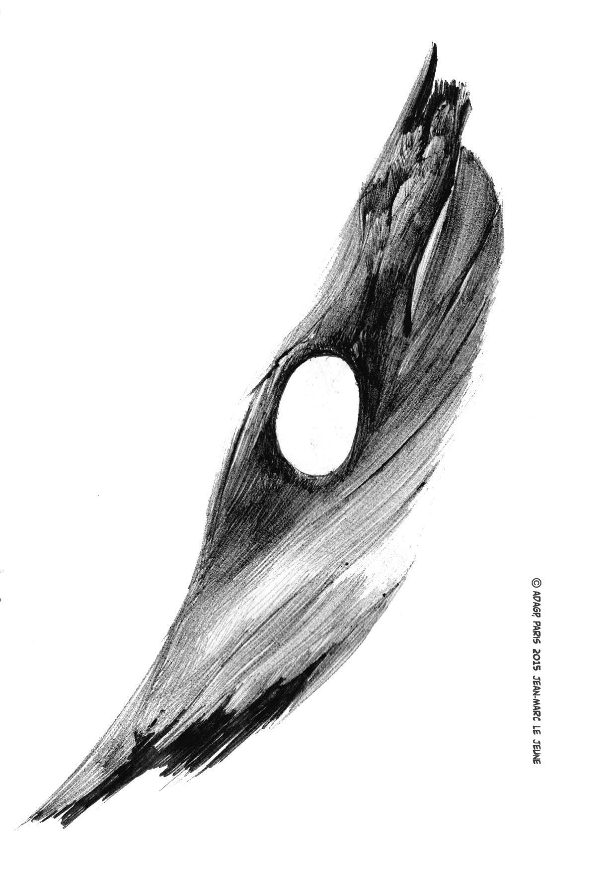 2012_réflexion_végétale