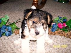 Favorites-dog-pictures-042_edited.jpg