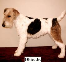 Favorites-dog-pictures-128_edited.jpg