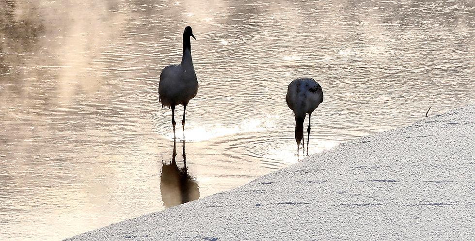 Cranes by Sue Park