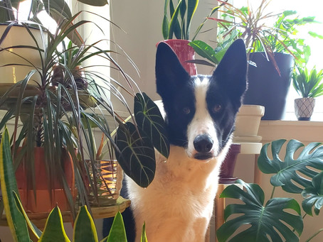 Pets and Plants: Podcast Ep#31
