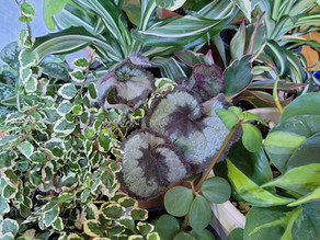Common Houseplant Questions: Podcast Ep#36