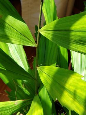 Pests & Plants: Podcast Episode #33