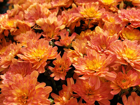 Fall Annuals- Plant Bio: Podcast Ep#15