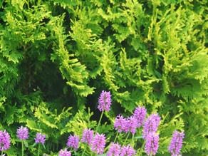 Landscape Plants & Design Pt.2 : Podcast Episode #41