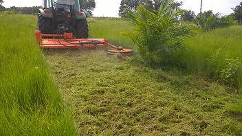 Tree mower