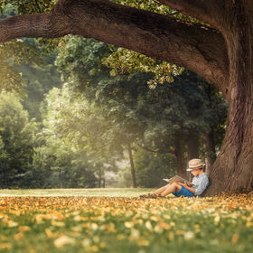 Little boy reading a book under big lind