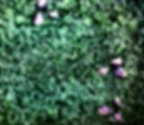 IMG_3021_edited.jpg