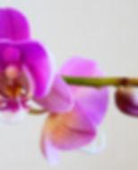 orchid-3934103_1920.jpg
