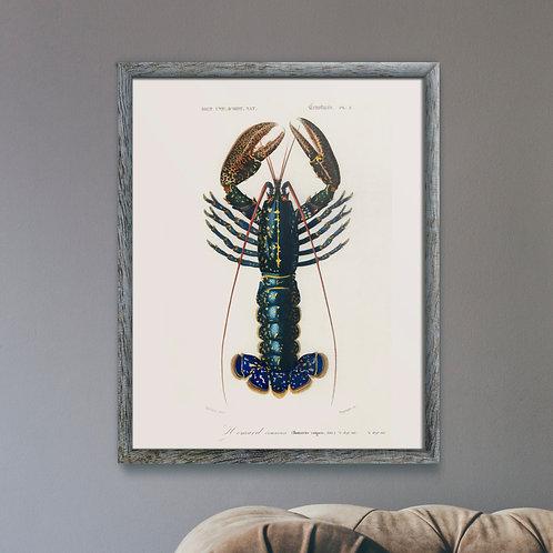 Framed Giclèe Art Print - Animal Illustration Lithograph