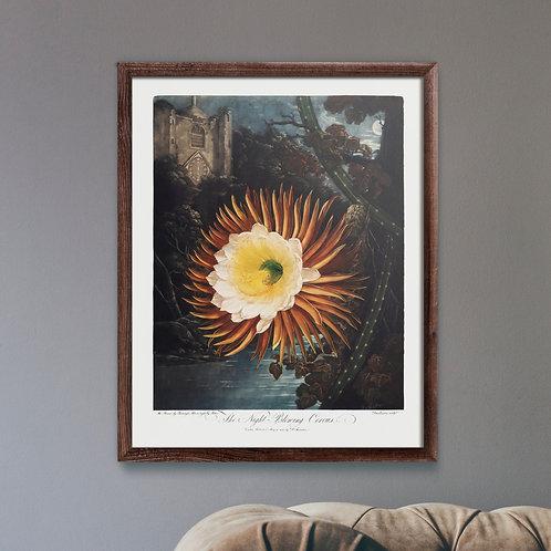 Framed Giclèe Art Print Mockup - Plant Illustration Lithograph