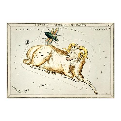 Sidney Hall - ARIES - Astrology Constellation of a Ram