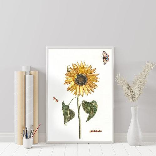 Johan Teyler - Sunflower, Caterpillar & Two Butterflies (À La Poupée)