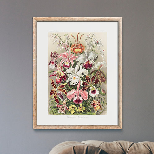 Framed Giclèe Art Print Mockup - Botanical Illustration Lithograph