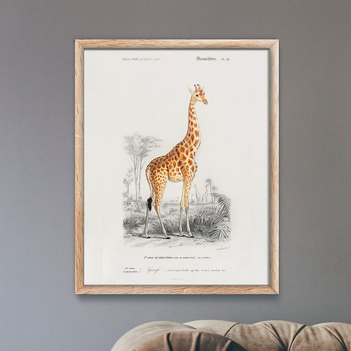 Framed Giclèe Art Print Mockup - Animal Illustration Lithograph