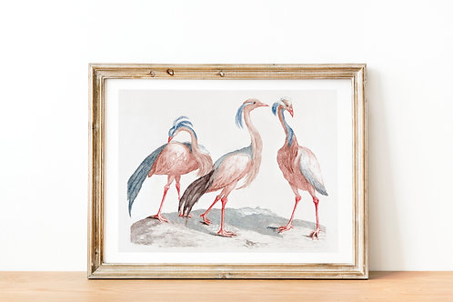 Johan Teyler - Miss Crane Birds