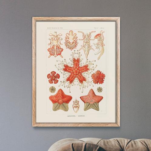 Framed Giclèe Art Print Mockup - Aquatic Illustration Lithograph