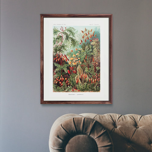 Framed Giclèe Art Print Mockup - Botanical Plant Illustration Lithograph