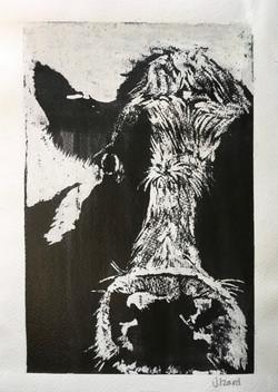 Black & White Cow