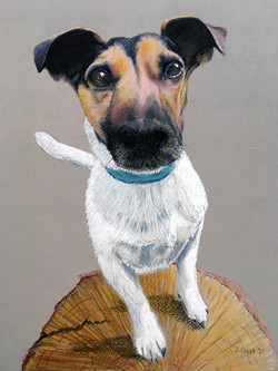 Ruby - Jack Russell