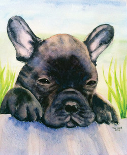 Nismo - French Bulldog Puppy