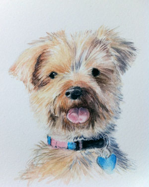 Ellie - Yorkshire Terrier
