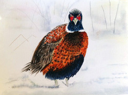 Pheasant in Snow