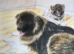 Diesel & Callie - Akita dogs