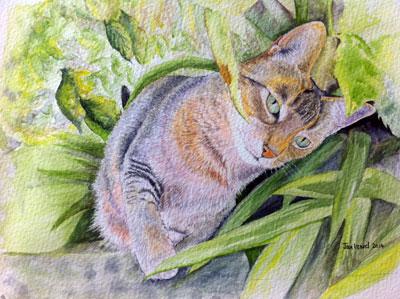 Chiko in Garden - Abyssinian