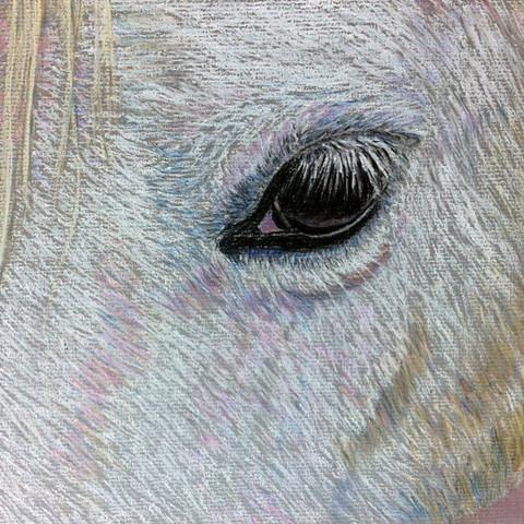 Portrait study of a horse