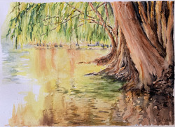 Willow on Water