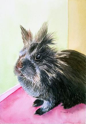 Maxi - Lionhead Rabbit
