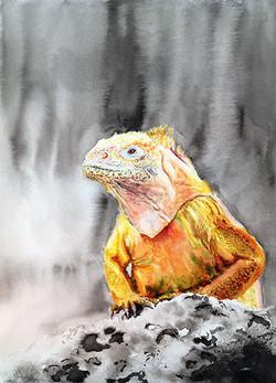 Iguana, Galapagos Is.