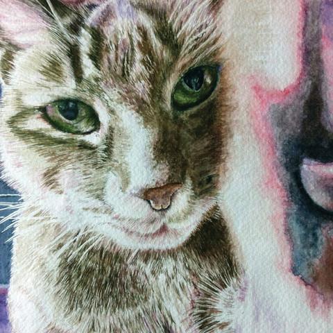 Cat portrait of Chiko