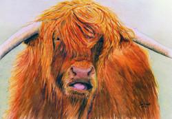 Hamish (Highland Cow)