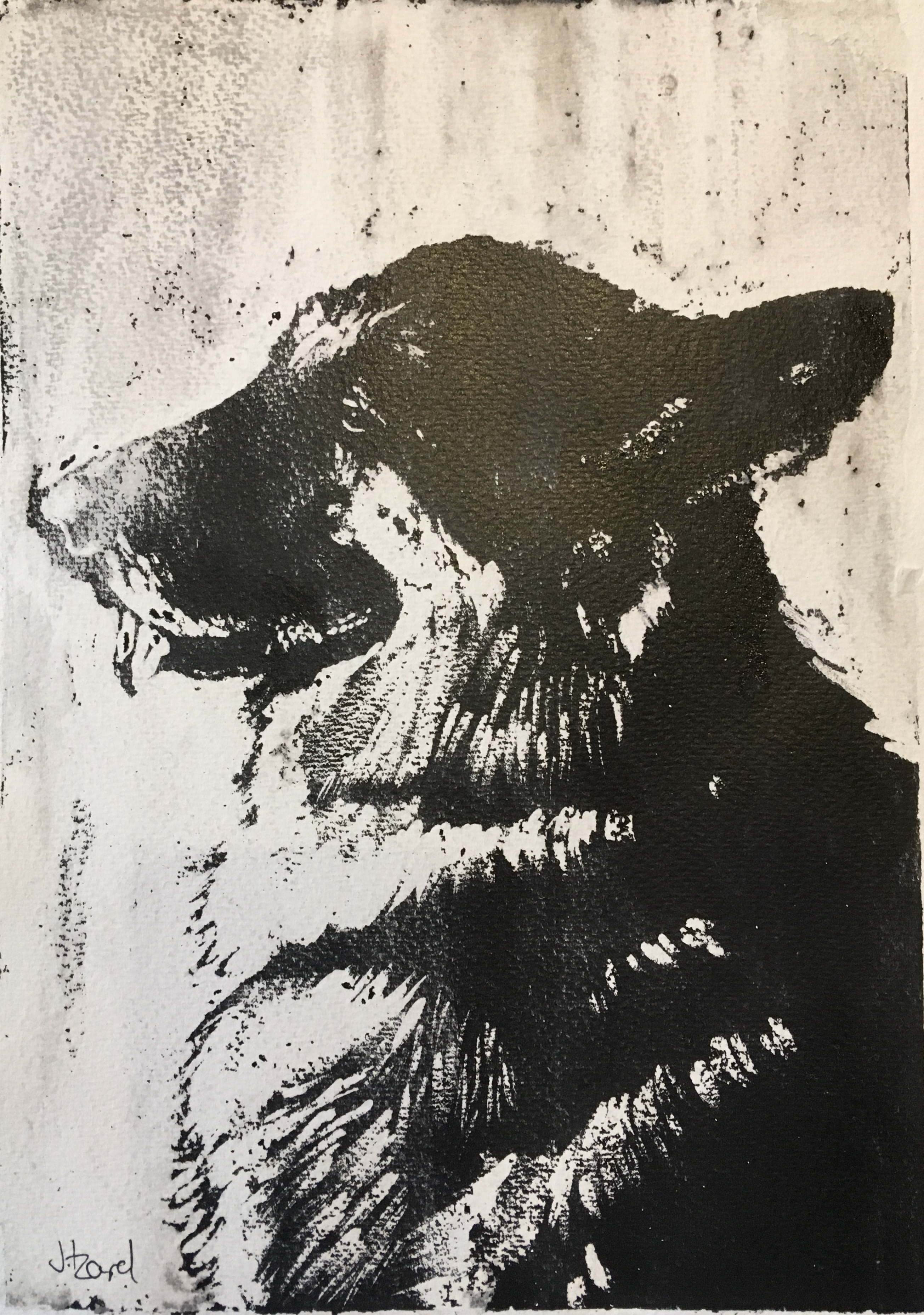 Skyla - Alsatian dog