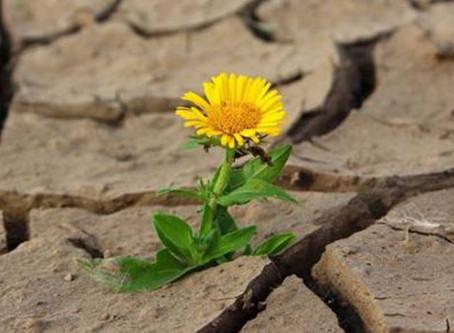 Resiliência no Empreendedorismo - 10 Características Fundamentais