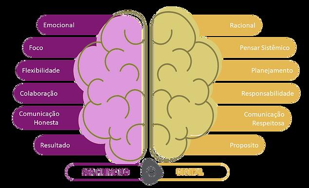cerebro 2.png
