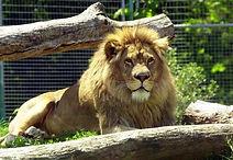 állatkert.jpg