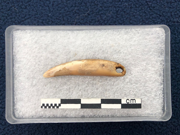 The Iron Age seal tooth pendant from the Knowe of Swandro, Rousay, Orkney