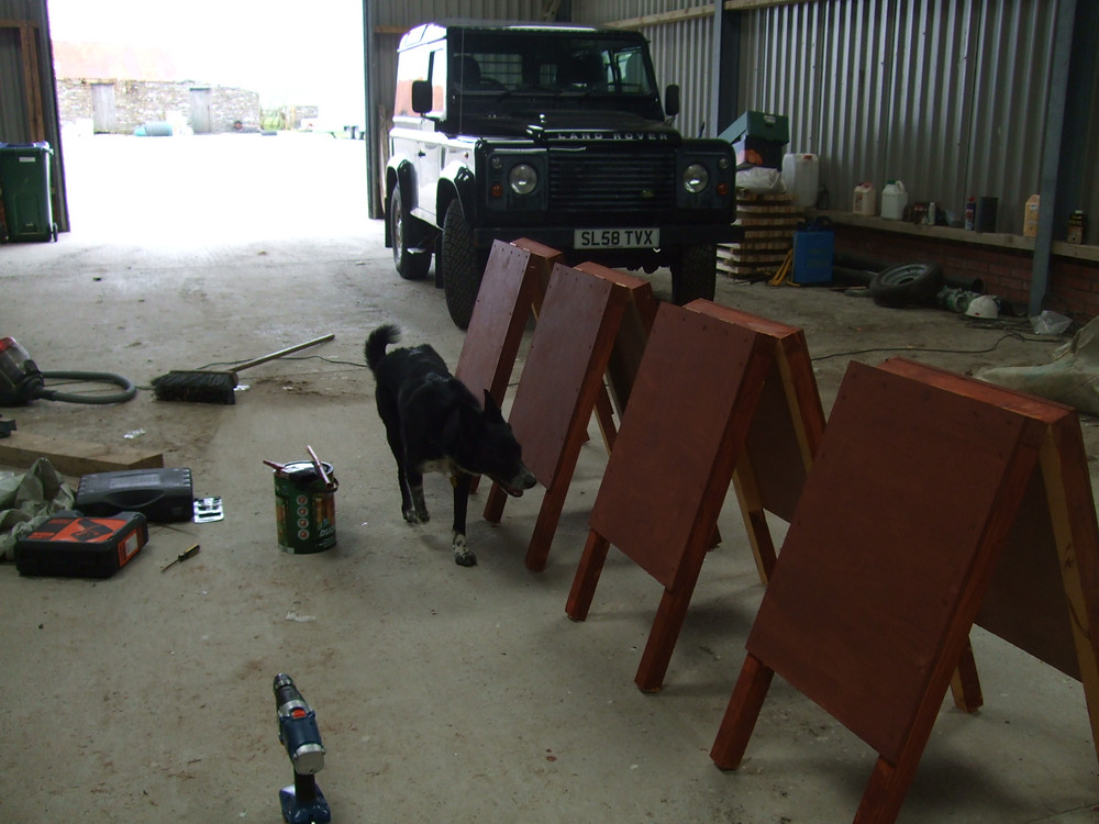Ben the quality control collie inspecting the finish on the new A boards for Swandro