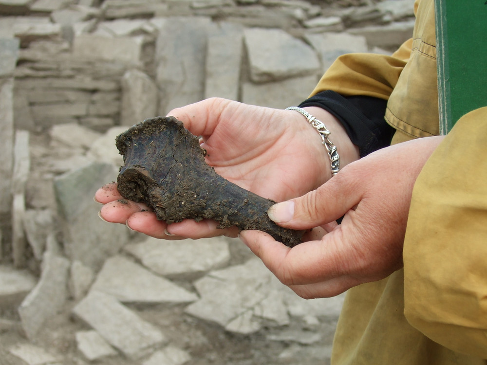 Antler burr from Swandro cut with a metal blade