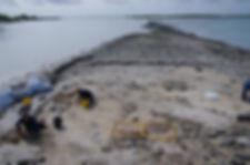 Whale-graves.jpg